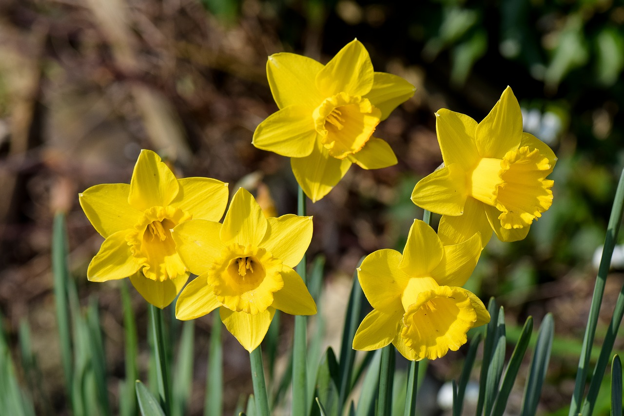Volunteers Wanted To Plant Spring Bulbs This Weekend
